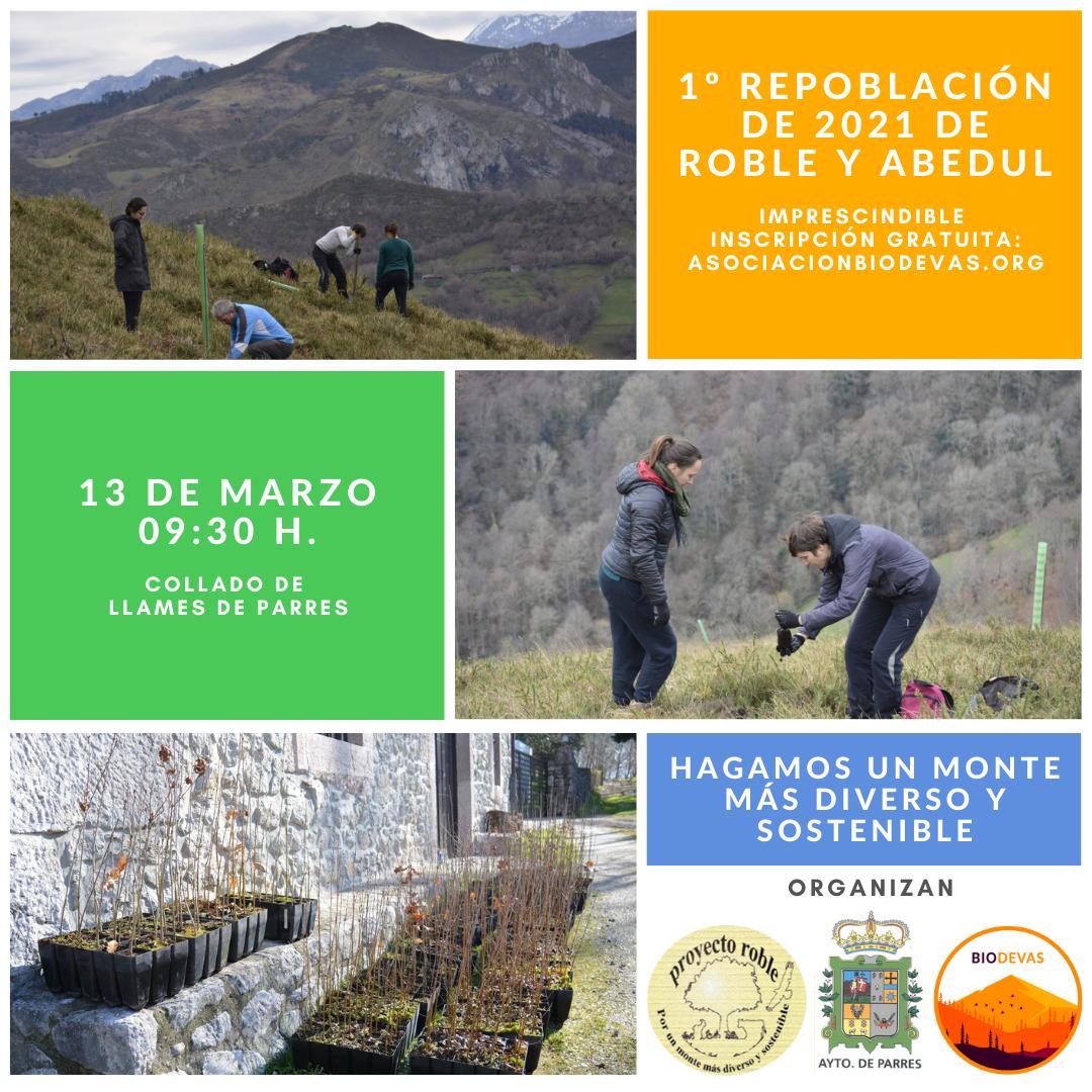 RRSS plantaciones Proyecto Roble 2021